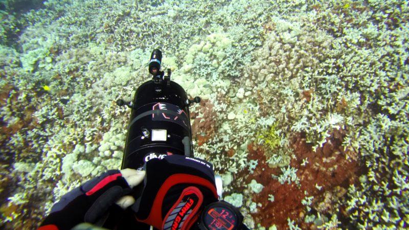 Branqueamento em um recife de coral em Papa Pay perto de Captain Cook, no Havaí, em 13 de setembro de 2019