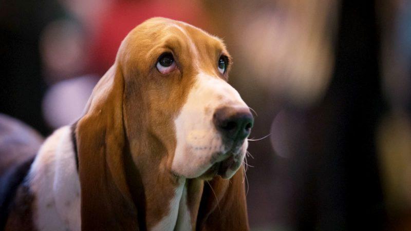 Cachorro com olhar triste