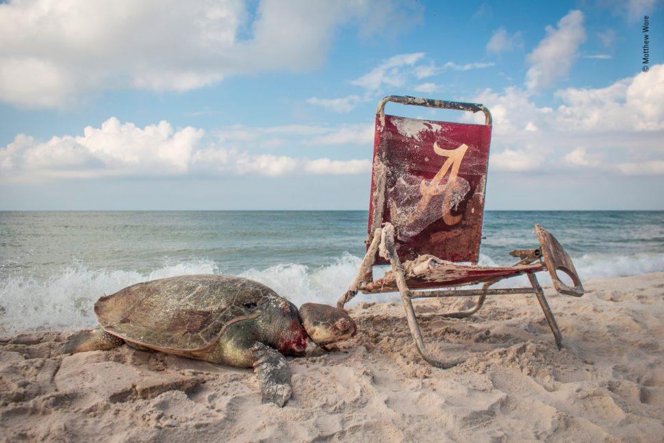 Em uma praia, uma tartaruga morta, com a cabeça ensanguentada, está próxiam a uma cadeira de jardim enferrujada.