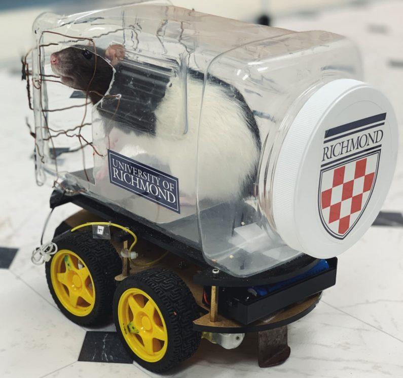 Detalhe do carrinho usado pelos ratos