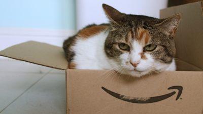 Gato dentro de uma caixa da Amazon