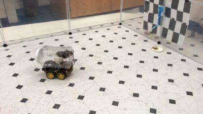 Rato dirigindo carrinho em experimento em laboratório
