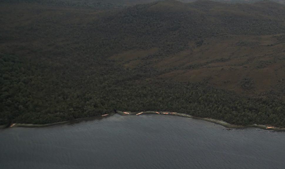 Visão aérea de baleias mortas encalhadas