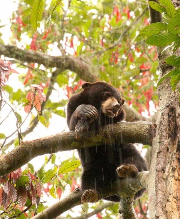 Como o desmatamento ameaça os animais de florestas tropicais