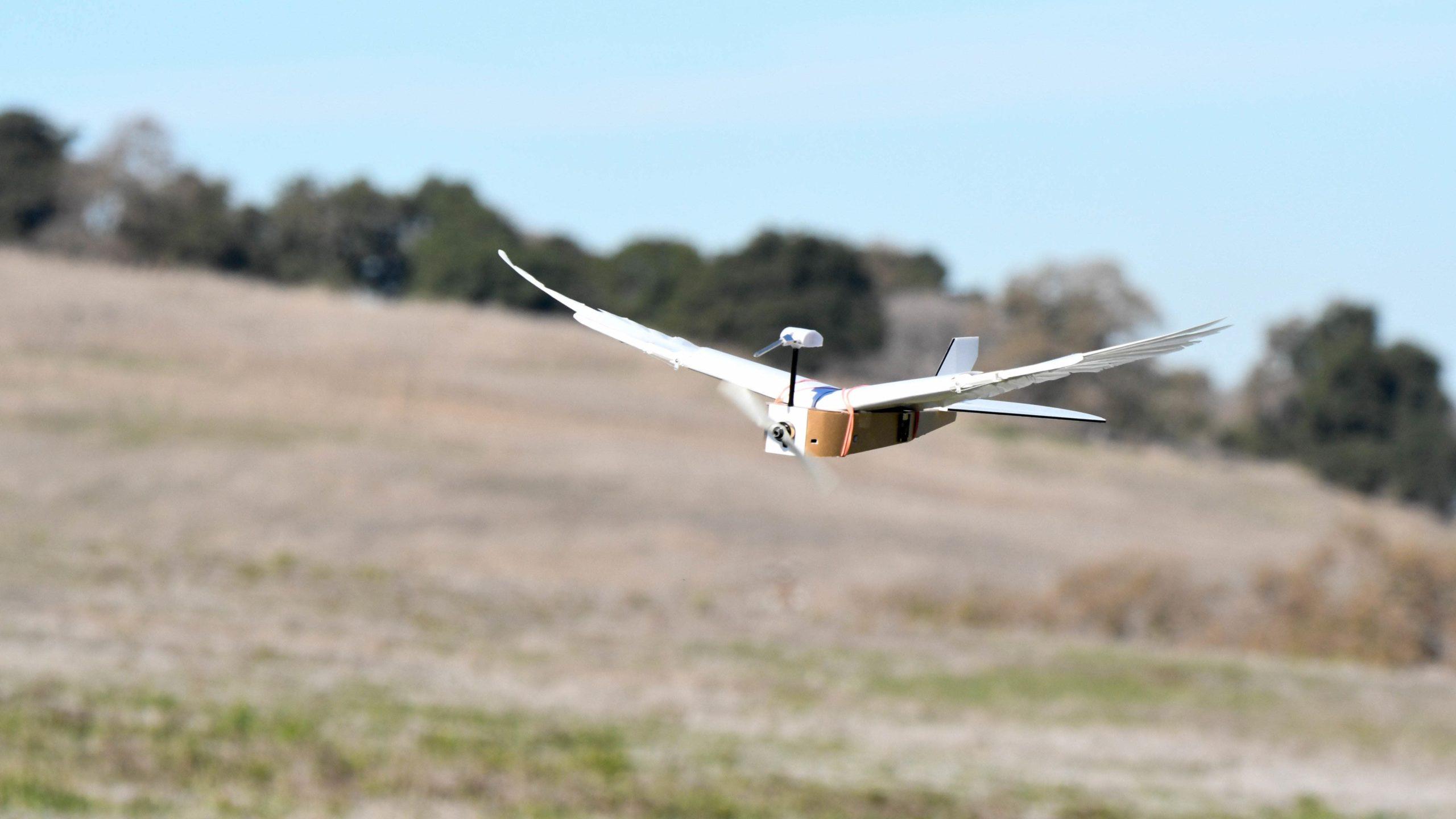Cientistas construíram um robô que voa com 40 penas de pombo