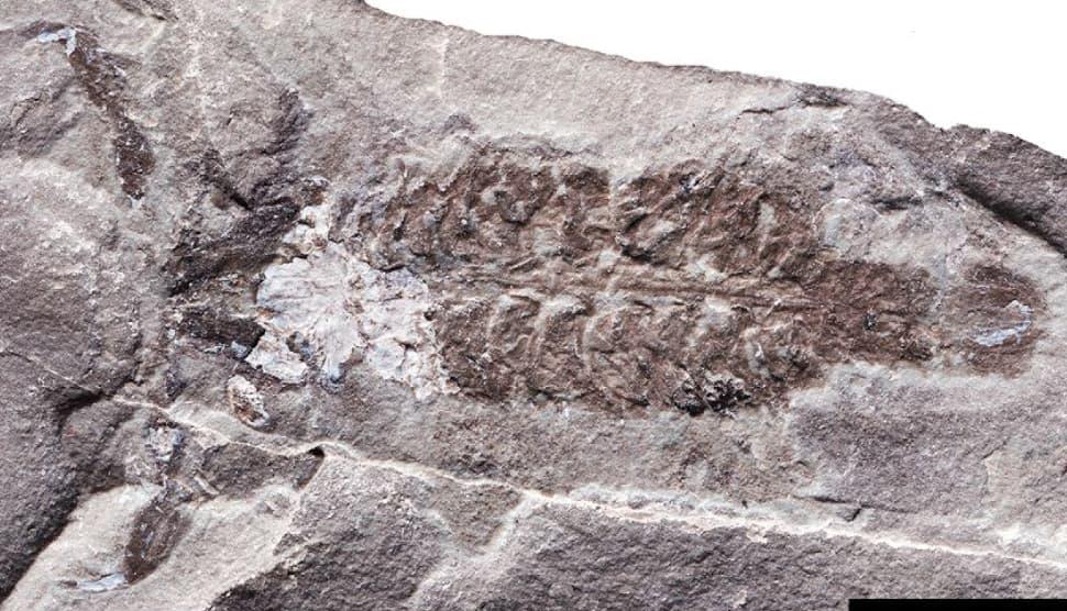 Escorpião de 436 milhões de anos estava entre os primeiros respiradores de ar do planeta - Gizmodo Brasil
