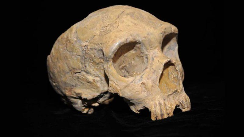 Crânio de neandertal de Gibraltar