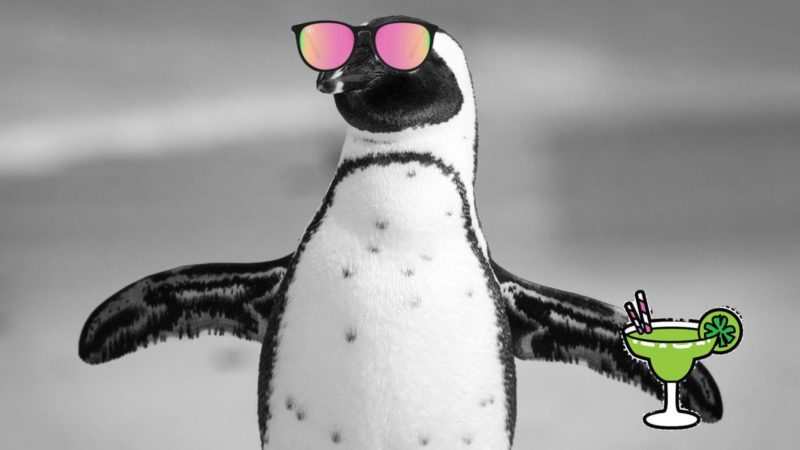 Pinguim tomando um drinque e de óculos de Sol