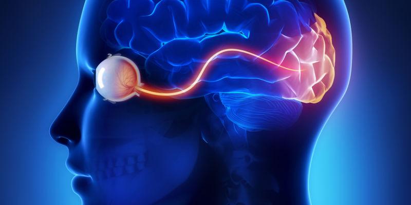 Olho ligado ao cérebro. Crédito: Thinkstock