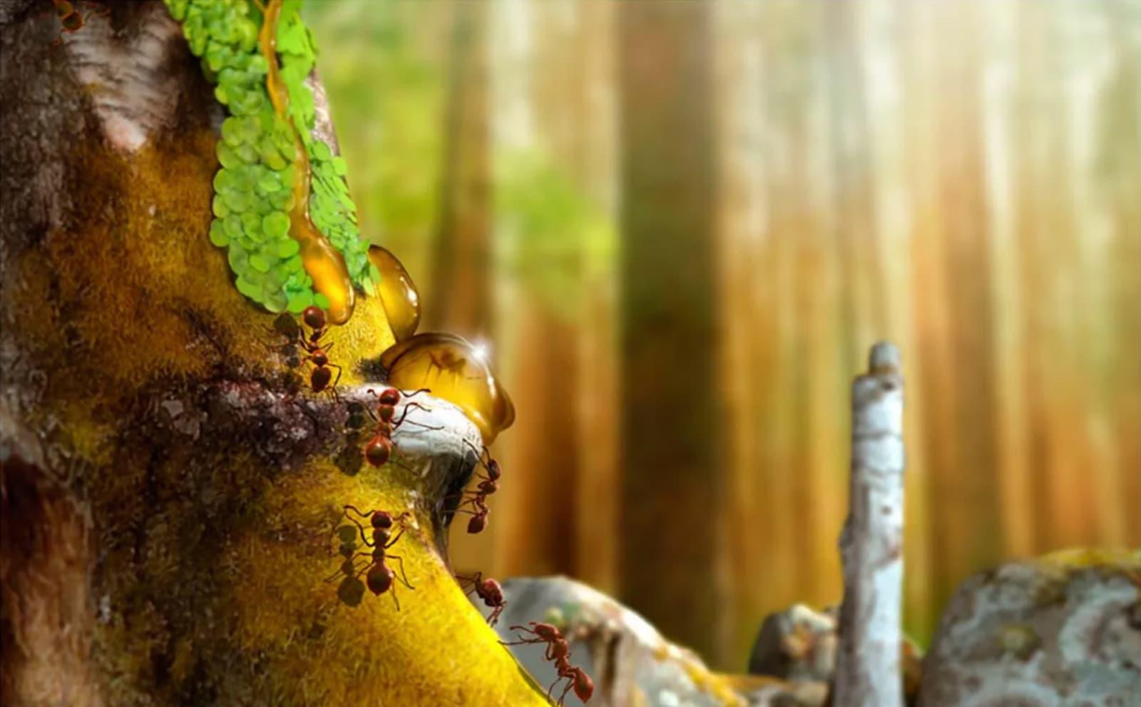 Monomorium, uma espécie de formiga previamente desconhecida