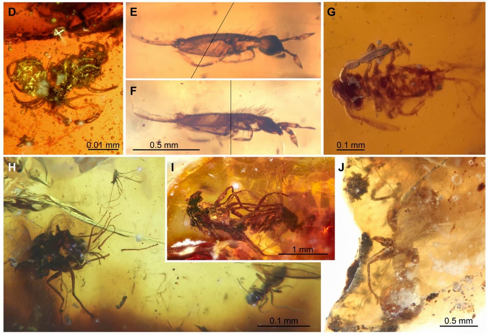 Vários animais encontrados presos no âmbar
