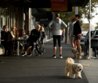 E fizeram questão de trazer seus amigos fofos, como este cachorro do lado de fora de um café em Auckland. Crédito: Getty Images