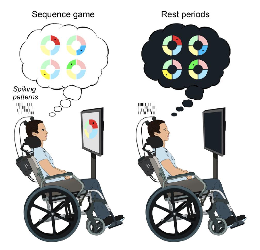 Estudo sugere que durante período de descanso serve para cérebro consolidar o que foi aprendido. Ilustração por J. Eichenlaub et al., 2020