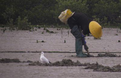 Pescador local próximo a pássaro enquanto trabalhava na costa. Crédito: Feng and Liang (2020), Fig. 1