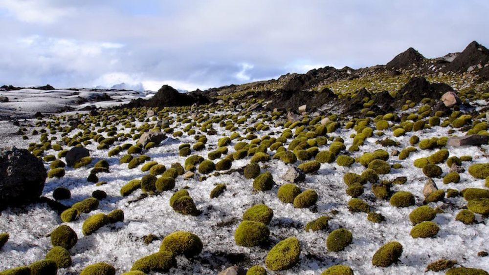 Estas bolas de musgo se mexem sozinhas e os cientistas ainda não sabem como