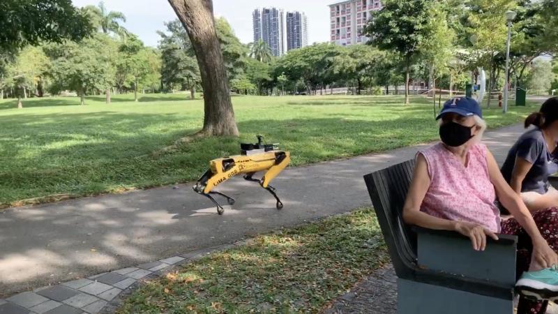 Robô Spot em parque de Singapura. Crédito: Strait Times