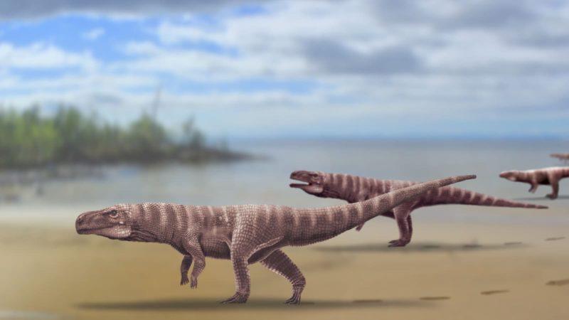 Batrachopus grandis, o crocodilo bípede