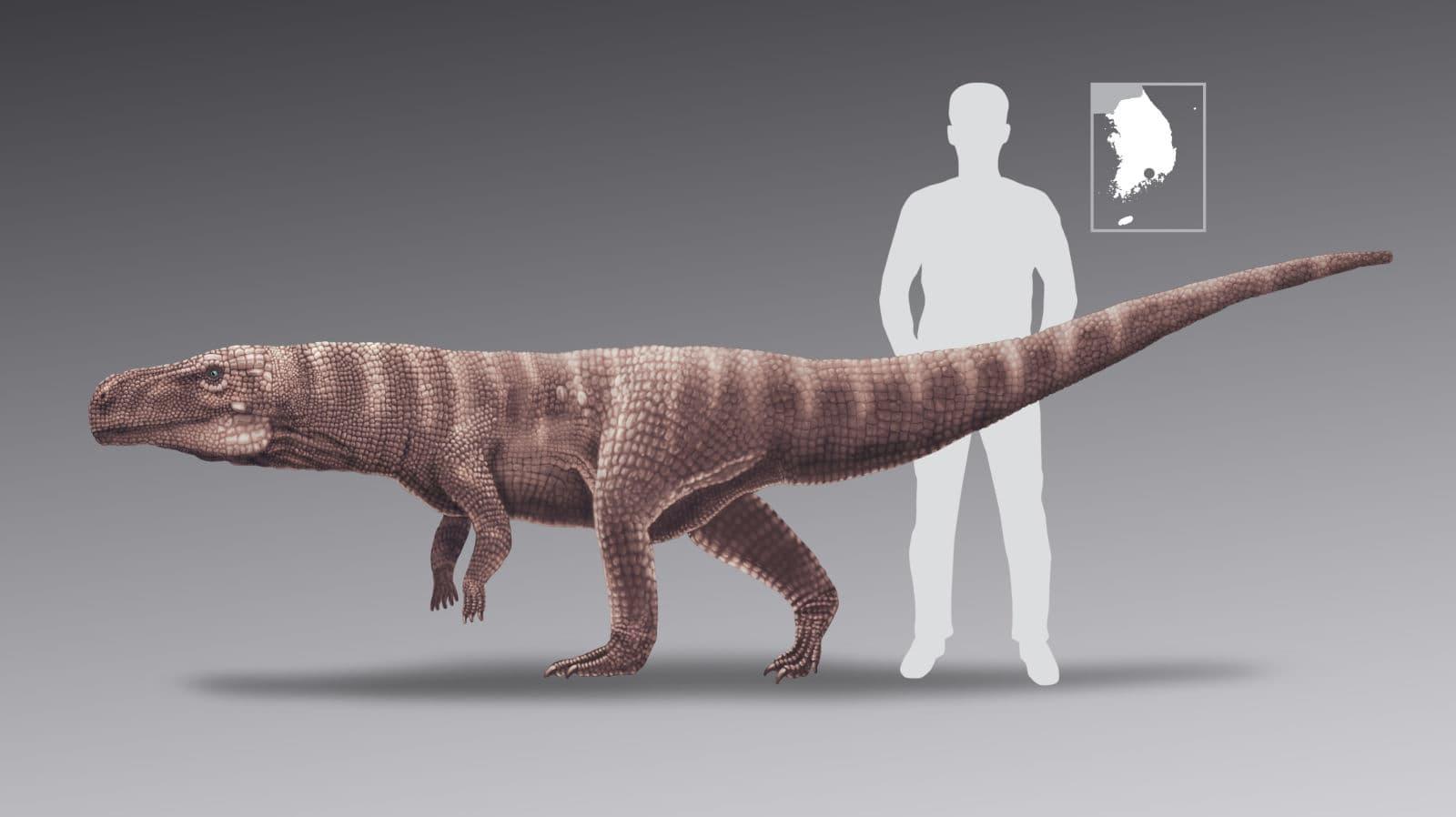 Batrachopus grandis, o crocodilo bípede, comparado a um humano