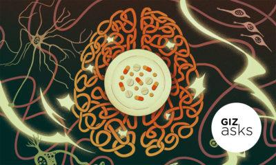 LIgações neurais de um cérebro. Ilustração por Angelica Alzona/Gizmodo