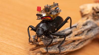 Besouro com uma pequena câmera. Crédito: Mark Stone/University of Washington