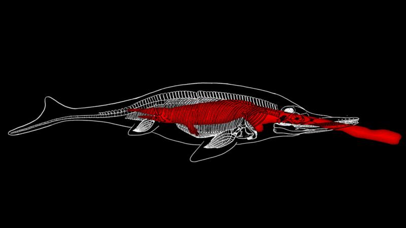 Fóssil de milhões de anos mostra lagarto enorme na barriga de um monstro maior ainda. Ilustração: Jim Cooke/Gizmodo