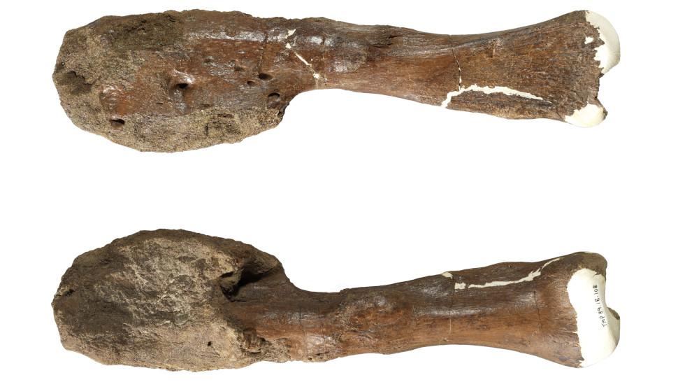 Paleontologistas detectaram sinal de câncer em fóssil de dinossauro pela primeira vez
