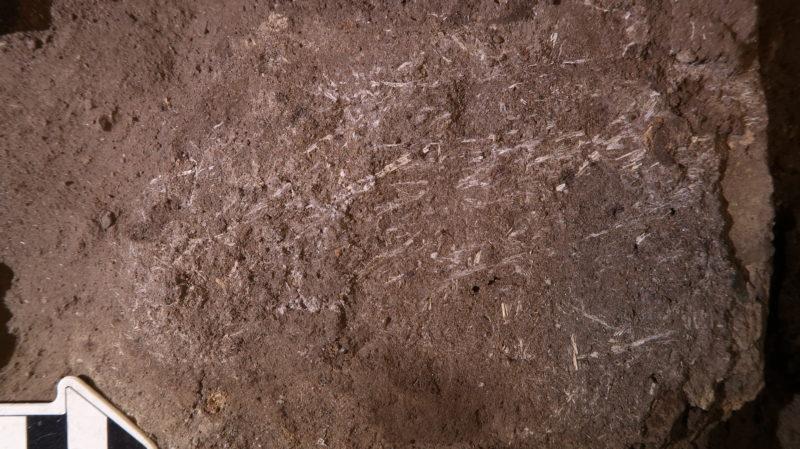 Grama fossilizada com mais de 200 mil anos. Crédito: L. Wadley