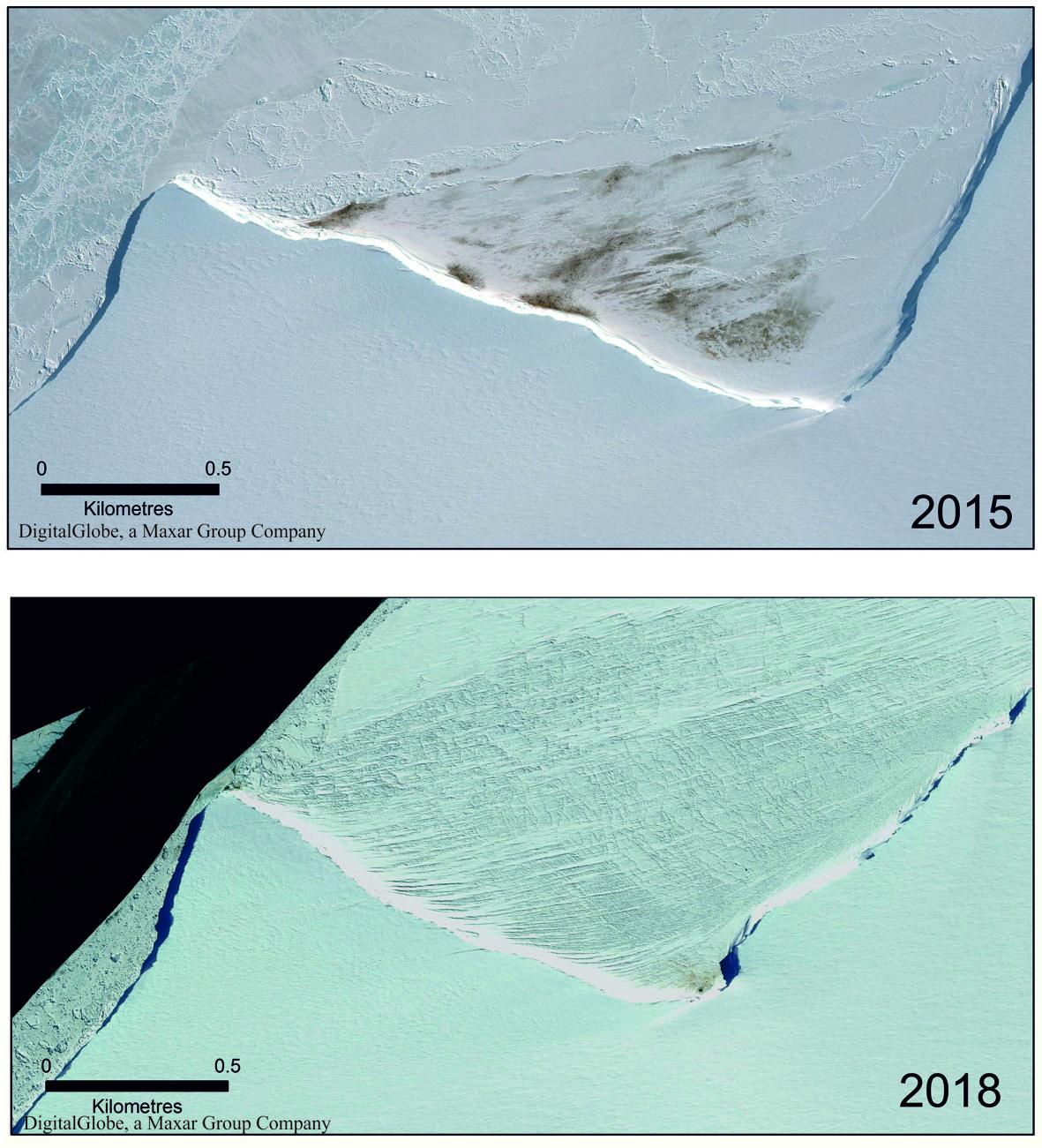 Colônias de pinguins imperadores na Halley Bay caíram dramaticamente de 2015 a 2018, como mostradas por essas imagens de satélite. Em 2019, a colônia desapareceu