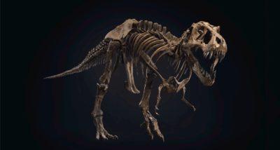 Esqueleto do tiranossauro rex chamado de Stan. Crédito: Christie's