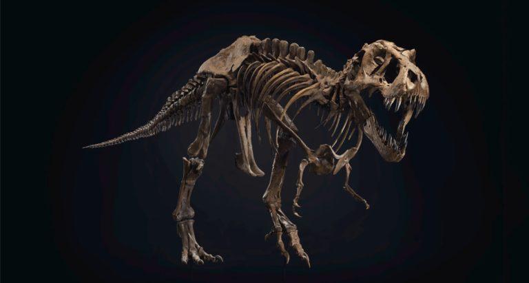 Leilão de esqueleto completo de tiranoussauro rex pode estabelecer novo recorde