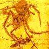 Uma aranha atacando uma vespa parasita, em uma cena antiga preservada em âmbar. Crédito: OSU College Science