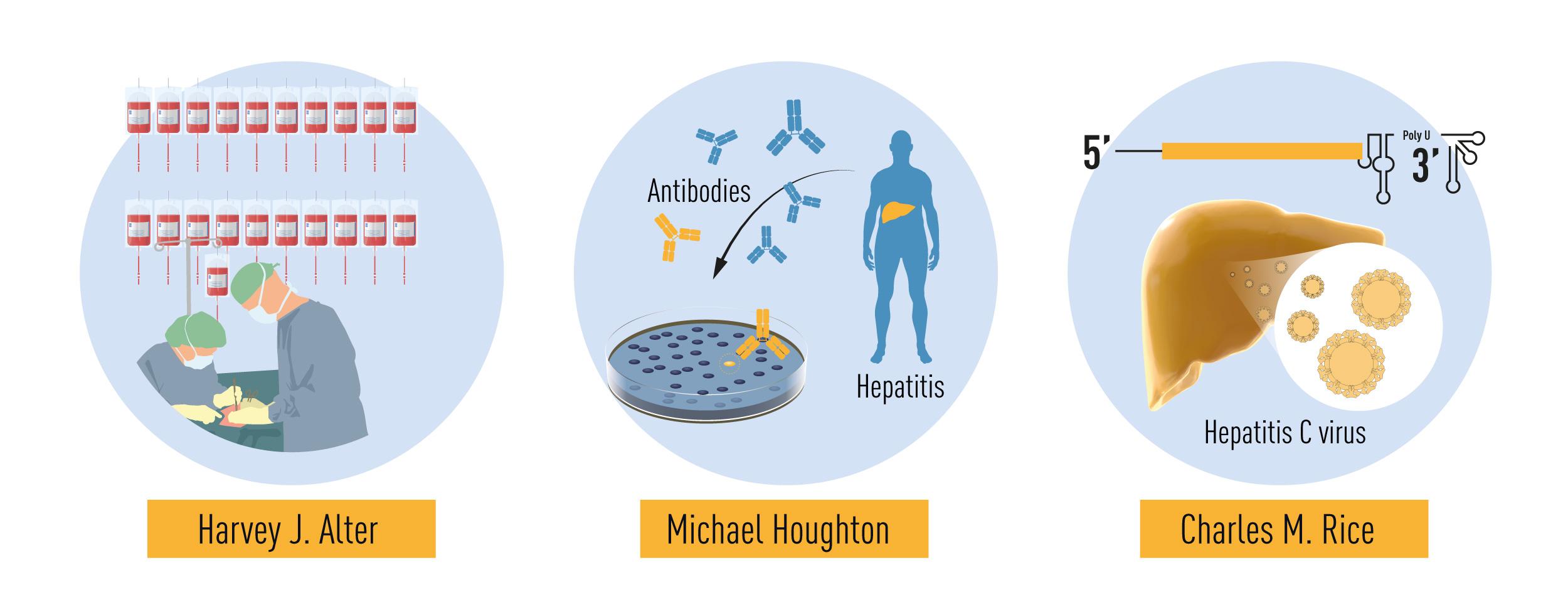 Nobel de Medicina 2020. Imagem: Nobel