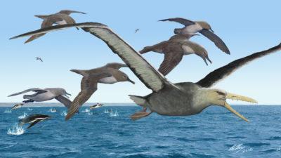 Ilustração de pássaros pelagornitídeos. Imagem: Brian Choo