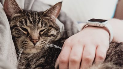 Apple Watch e gatos. Imagem: Chris Abney (Unsplash)
