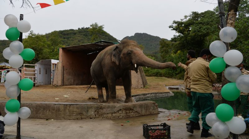 Elefante mais triste do mundo. Imagem: Farooq Naeem (Getty Images)