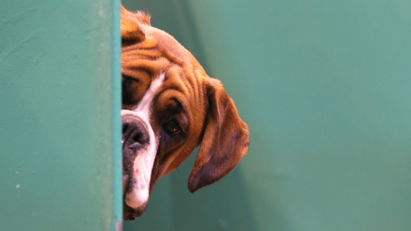 Cães. Imagem: Matt Cardy (Getty Images)