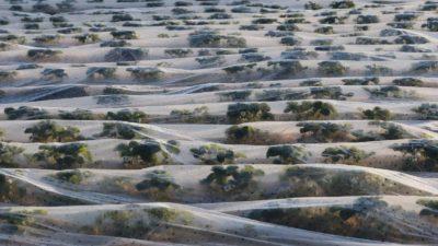 Plantação coberta por plástico. Imagem: Yann Schreiber (Getty)